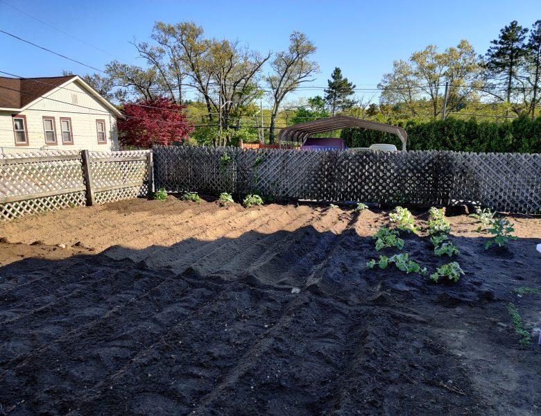 We have a garden!